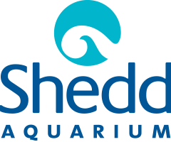 Chicago Shedd Aquarium Free Days